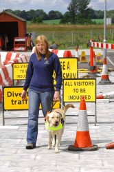 training a guide dog