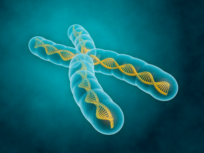 Chromosomes contain our genetic code